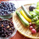 素材保存食8